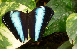 butterly arc